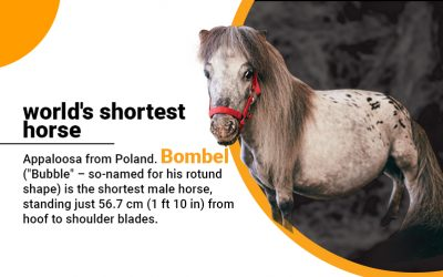 Shortest Horse in the World